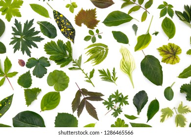 Flat layer of leaves of various plants lies on a white background.