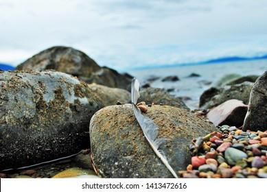 Flathead Lake Montana USA Feather