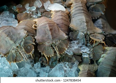 Flathead Lobster (Thenus orientailis) also known as Bay Lobster or Moreton Bay Bug, on ice for sale at market, closeup and selective focus.