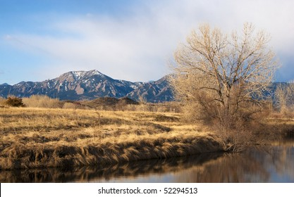 The Flatirons Mountains near Boulder, Colorado with prairie foreground of golden grasses and a bright winter tree