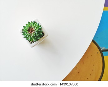 Flatlay concept, Cacti pot on the dining table