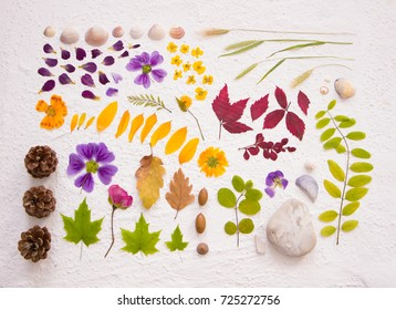 flatlay nature findings