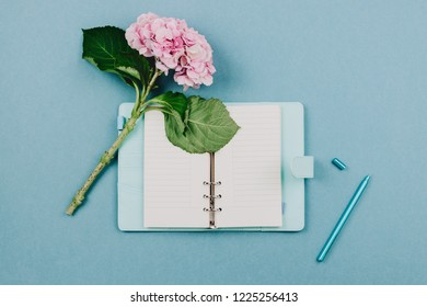 Flatlay of pink hortensia flower, opened blue notebook and pen on pastel background