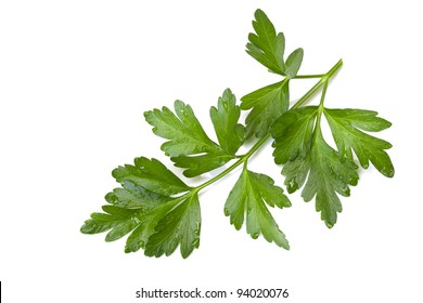 Flat-leaf parsley, isolated on white, with raindrops.