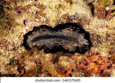 The flatworms, flat worms, Platyhelminthes, Plathelminthes, or platyhelminths are a phylum of relatively simple bilaterian, unsegmented, soft-bodied invertebrates