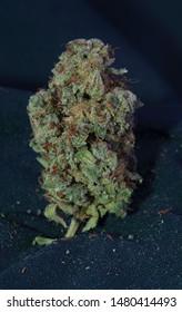 Flav strain medicinal cannabis flower