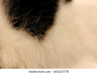flaw cat. Close up white and black animal hair or cat fur texture background. Difference color shade of softness cat flaws texture.