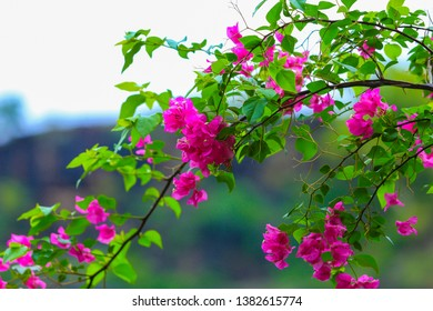 Flawer stock image hd photo