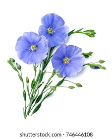 Flax blue flowers close up on white.