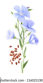 Flax flower with seeds