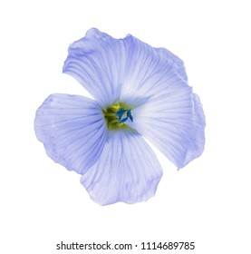 flax flowers isolated on white background macro