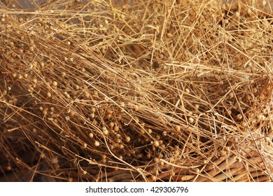 Flax plant dry close up photo background