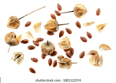 Flax seed set isolated on white background. Top view. Flax seeds and linseed bolls, macro photography. Flax seeds and linseed bolls isolated on white background.