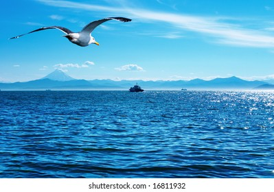 Flaying seagull