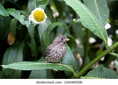 Fledgling bird sitting on a leaf with a flower in the background.