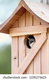 A fledgling sparrow peeks out of the opening of the cedar bird house.