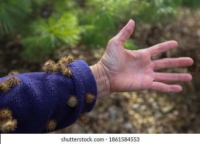 Fleece sleeve with burdock burrs stuck on them after a walk