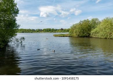 Fleet Pond Nature Reserve in Hampshire, UK