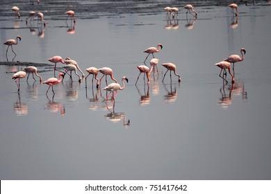Flemingos Birds