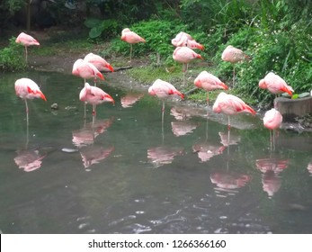 Flemingos were standing in one leg for rain at Taipei zoo, Taipei, Taiwan-23/12/2018.