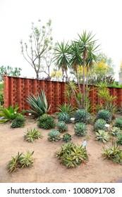 Fleshy plant in a botanical garden
