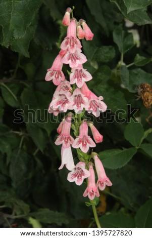 Fleurs Jardin Automne Nature Vert Stock Photo (Edit Now) 1395727820 ...