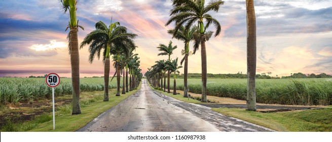 Flic-En-Flac Road Mauritius