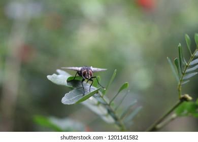 flies are alighting