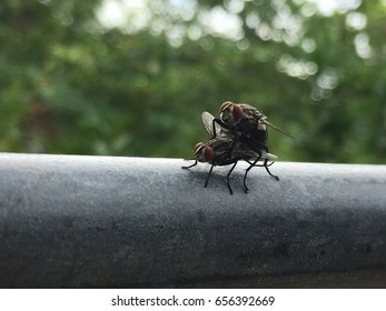 Flies Mating. Blurred background.