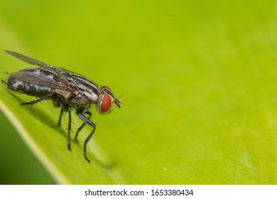 flies on green leaf at the park