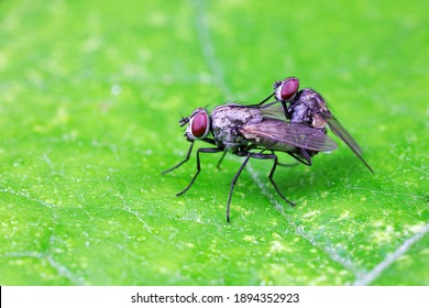 Flies on plants in the nature, North China Plain