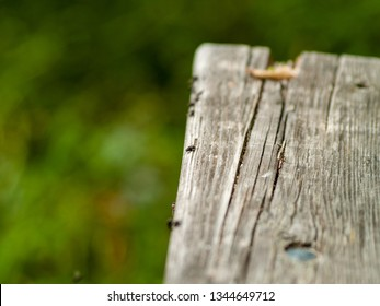 Flies perched on an old wooden board
