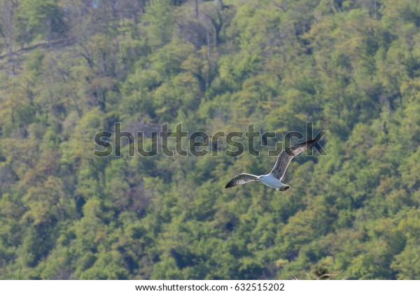 Flight of an albatross on a green background