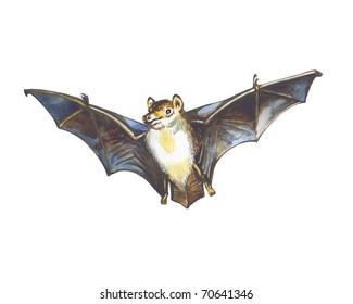 Flight of a bat