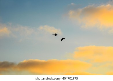 The flight of the birds in the evening sky.