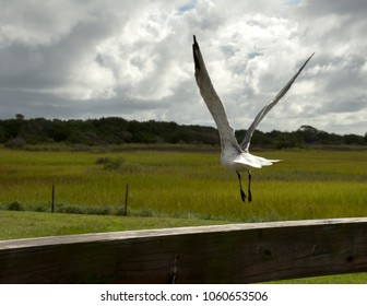 Flight in Motion