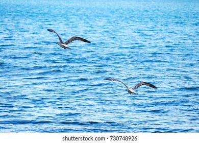 Flight over the sea
