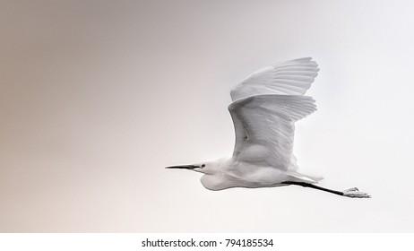 flight of a sea bird
