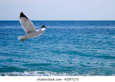 Flight of a seagull