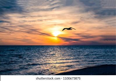 Flight of seagull bird over sunset ocean