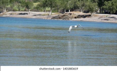 Flight seagull in Leros Island Greece