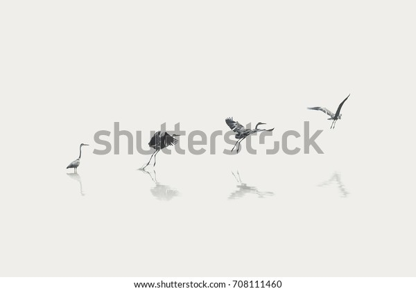 Flight Steps Progress Migratory Bird Stock Photo (Edit Now