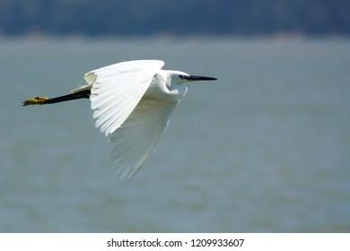 The Fling Bird