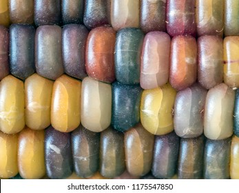 Flint corn,also known as Indian corn or sometimes calico corn) is a variant of maize