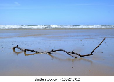 Floated branch on beach