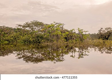 Floated Typical Trees In Cuyabeno Wildlife Reserve, Ecuador