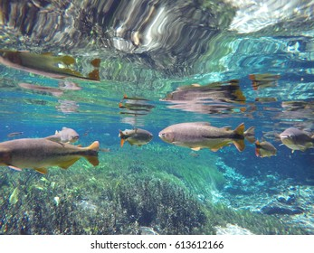 floating in clean river with fishes