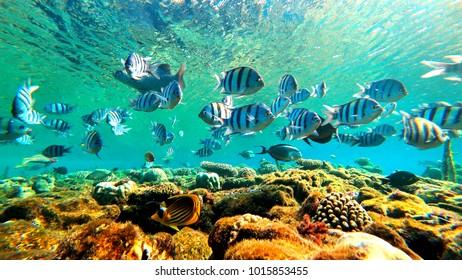 floating fish underwater