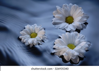 Flower Floating In Water Images Stock Photos Vectors Shutterstock
