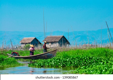 Floating garden in Myanmar. Inle is one of the most popular tourist destination in the Shan State.